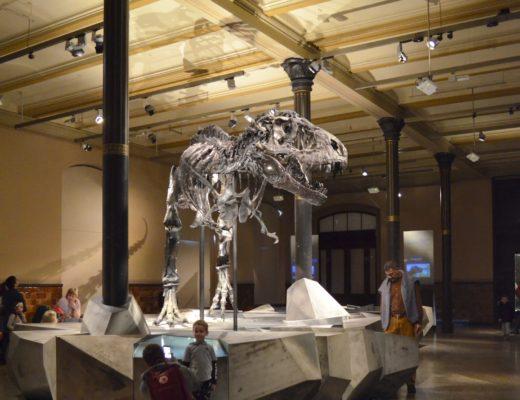 Szkielet dinozaura t-rexa